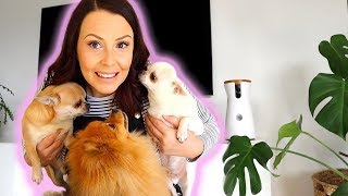 LIFE WITH 3 DOGS + OUR ROUTINE!
