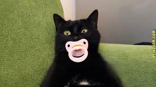 Приколы с кошками и котами ! Подборка смешных и интересных видео =)