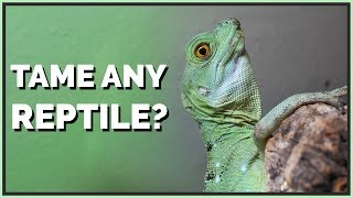 Can Any Reptile be Tamed?