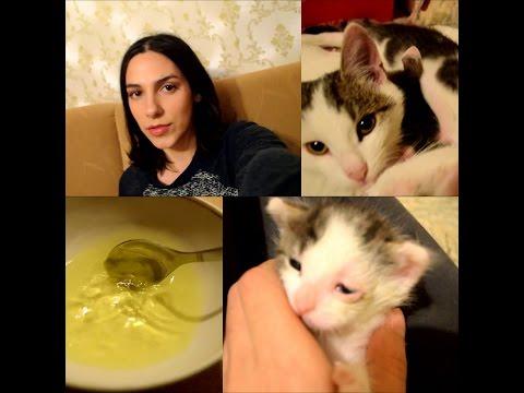 Глаза котенка гноятся? Лечим /Взяла бездомную кошку