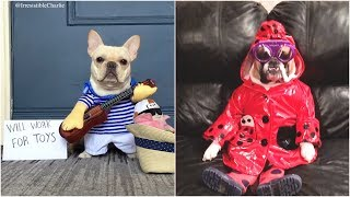 Funniest Dogs In Costumes 2019 | Hilarious Pet Costumes