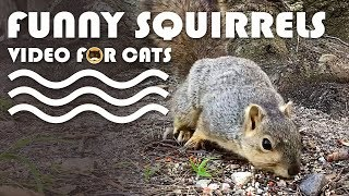 VIDEO FOR CATS TO WATCH - Funny Squirrels!