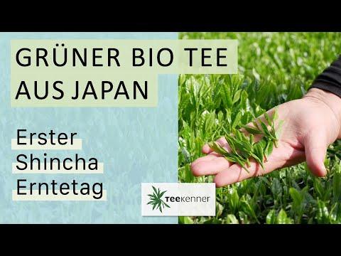 Grüner Bio Tee aus Japan - erster Shincha Erntetag 2018