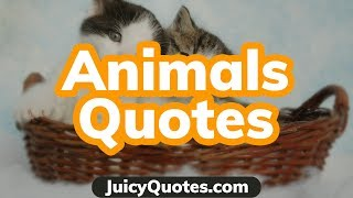 Top 15 Animals Quotes And Sayings 2020 - (That Are Meaningful)