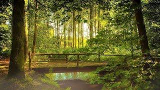 Sonidos de la Naturaleza Bosque Relajación Meditación Dormir Estudiar Spa Sonidos de Agua Pájaros