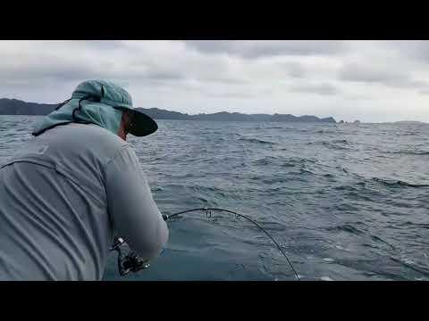 Hard hitting kingfish