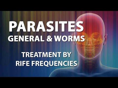 Roundworm worm 8 mga titik