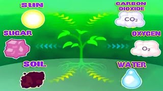 Photosynthesis, Leaf Structure & Function, Science Videos