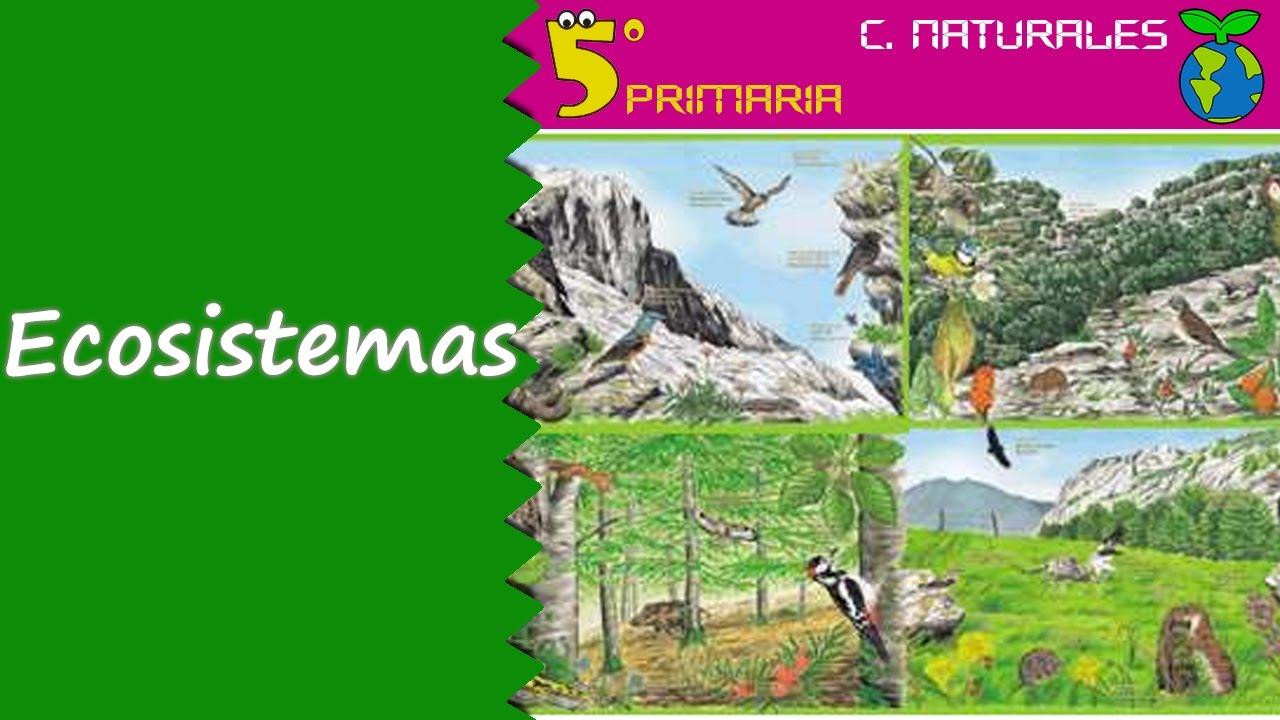 Ecosistemas. Naturales, 5º Primaria. Tema 6