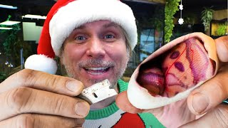 CHRISTMAS SNAKE EGG CUTTING SPECIAL!! | BRIAN BARCZYK by Brian Barczyk