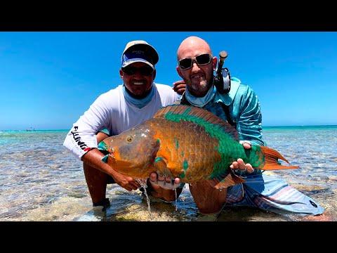 Parrot Fish con Pablo Realini