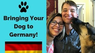 BRINGING YOUR DOG TO GERMANY // PCS overseas with the military
