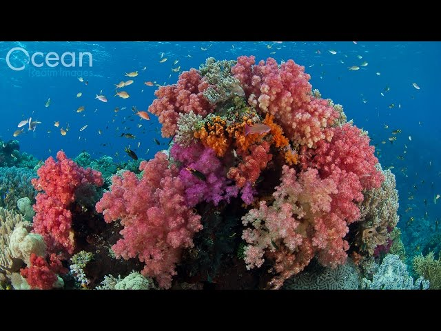 Diving The World's Richest Reefs - Raja Ampat, Indonesia