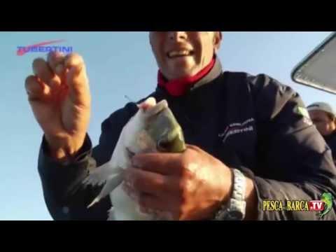Comprare una causa invernale per pescare a buon mercato in SPb