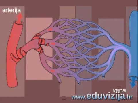 Elipsoid sa hipertenzijom