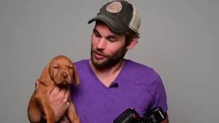 How To Photograph A Puppy In The Studio