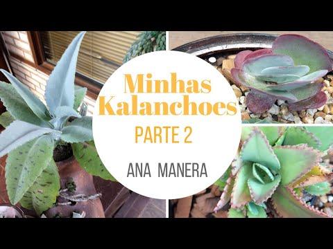 Aloe vera gél pikkelysömörről vélemények