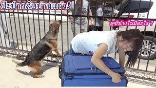 ป๊ะป๋ากลับบ้านแล้ว !! มาดูว่าโซดาจะดีใจแค่ไหน? เปิดกระเป๋าฝรั่งกันว่าข้างในมีอะไรบ้าง ???