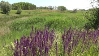 Don steppe flowers, beautiful landscape .. Донская степь, цветы и красивый пейзаж