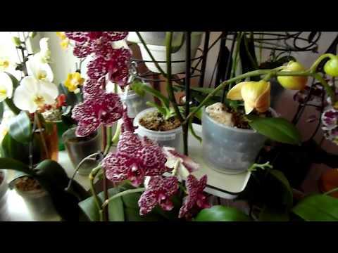 Бросаем свои орхи на произвол))). Подготовка орхидей.
