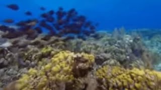 second largest Barrier Reef on Earth- Wild Caribbean - BBC Nature