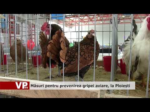Măsuri pentru prevenirea gripei aviare, la Ploiești