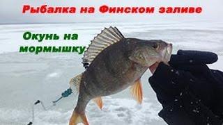 Ловля зимой на финском заливе окуня видео