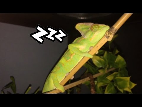 What Do Chameleons Dream About