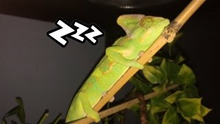 What Do Chameleons Dream About?