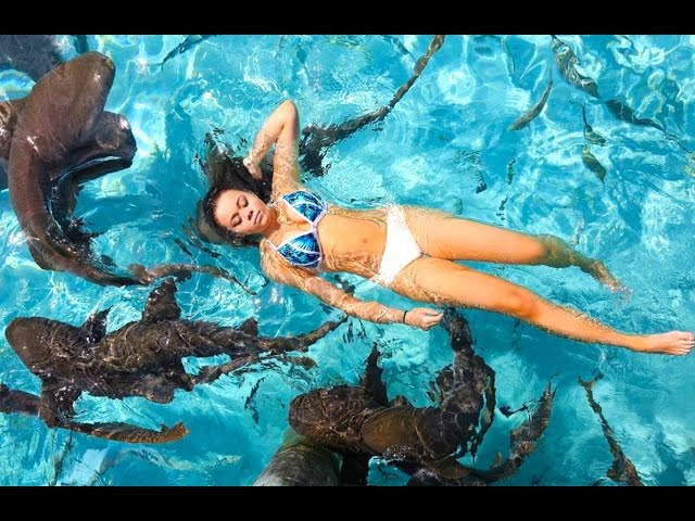 SWIMMING WITH SHARKS! | HeyItsSarai