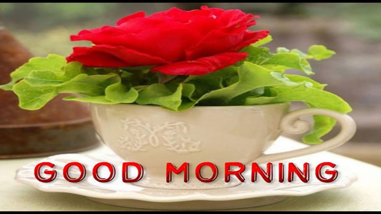Video Latest Good Morning Wishes Sms Greetings Whatsapp Video Message