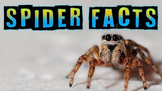 Spider Facts for Kids!