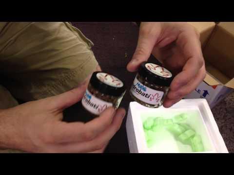 Dart frog Unboxing video