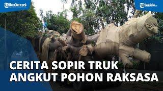 Cerita Sopir Truk Angkut Pohon Baobab Raksasa Crazy Rich Semarang, Ada Pantangan dan Kendala