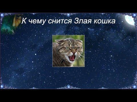 К чему снится Злая кошка (Сонник)