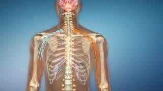 Il Sistema Nervoso: la base di ogni movimento
