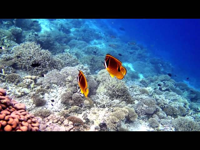 House reef snorkeling in Vilamendhoo Resort