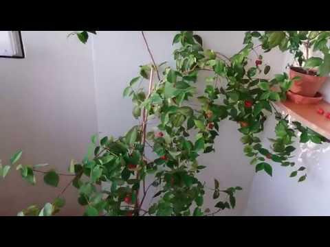 Как опылить растение в домашних условиях. Опыление без пчел)