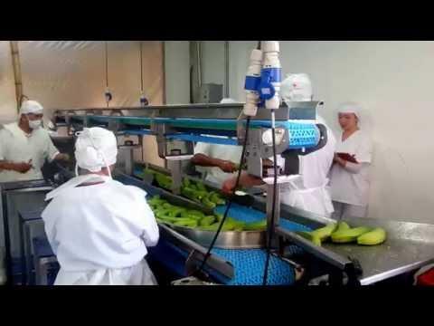 Banda de pelado manual de plátano - Industrias IMA