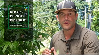 Outdoor Home Grow Ep 2 - The Vegetative Stage Of Your Cannabis Plants