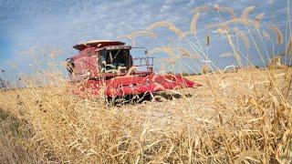Farmers feeling pain from tariffs