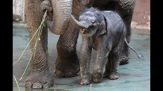 Dramatic rescue of baby elephant