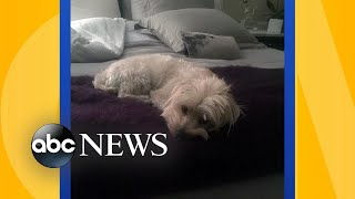 Does it hurt the quality of your sleep to let your dog in the bedroom?