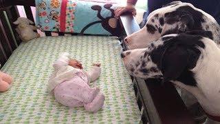 Anne, Bebeğini Köpekleriyle Yalnız Bıraktı Ancak Beklenmedik Bir Şey Oldu