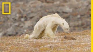 Nu smelter Arktis hurtigere end i 1.500 år