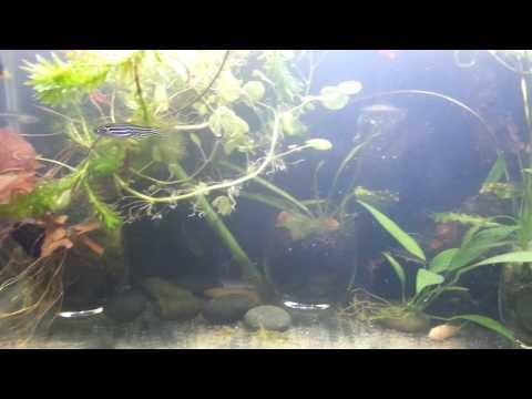 Helmint worm litrato
