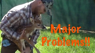 "Whitetail Deer Farming ""Major Problems """