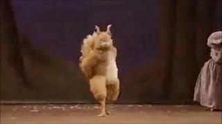 Танец белки