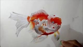 Cara Menggambar Ikan Koi 3d ฟรวดโอออนไลน ดทวออนไลน