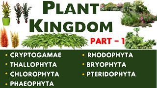 Plant Kingdom Part -1 Important Biology Lecture chapter-11(SSC , UPSC , CDS , PSC and other Govt)